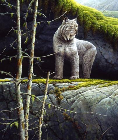 Le fantôme des forêts - 2000