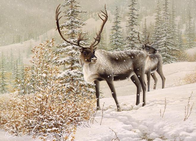 x Caribous - 1999