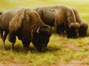 3 Bisons - 2007