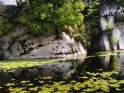 Au marais de Costello Creek - 2007
