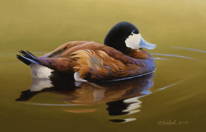 Canard roux - 2006