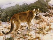 Cougar - 2008