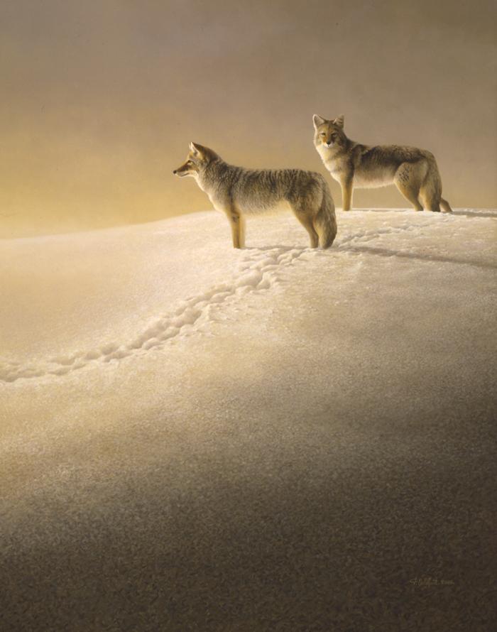 Dunne de neige - 2005