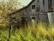Le carouge et la vieille grange - 2001