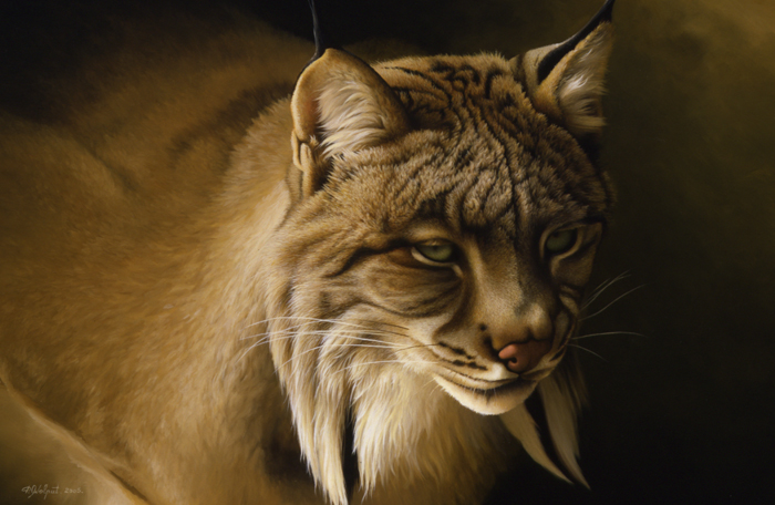 Lynx du Canada - 2005